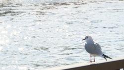 Bird looking at the Sumida River 02