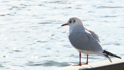 The bird looking at the Sumida River 03