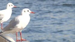 A bird staring at the Sumida River 01