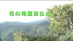 Mt. shibutsu flowers