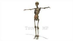 映像CG 人体模型120430-006