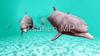 CG illustrations Dolphin