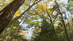 樹木002(ストックムービーHD素材)