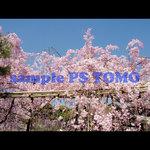 Sakura KYOTO no.0010