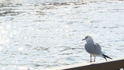 Bird looking at the Sumida River 02