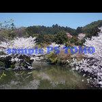 Sakura KYOTO no.0013