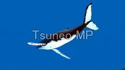イラストCG クジラ