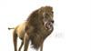 CG Lion loop120401-004