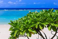 沖縄本島/大宜味のビーチと植物 218C7991