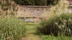 Heritage of Shirakawa-go Gassho houses and Japanese pampas grass-5